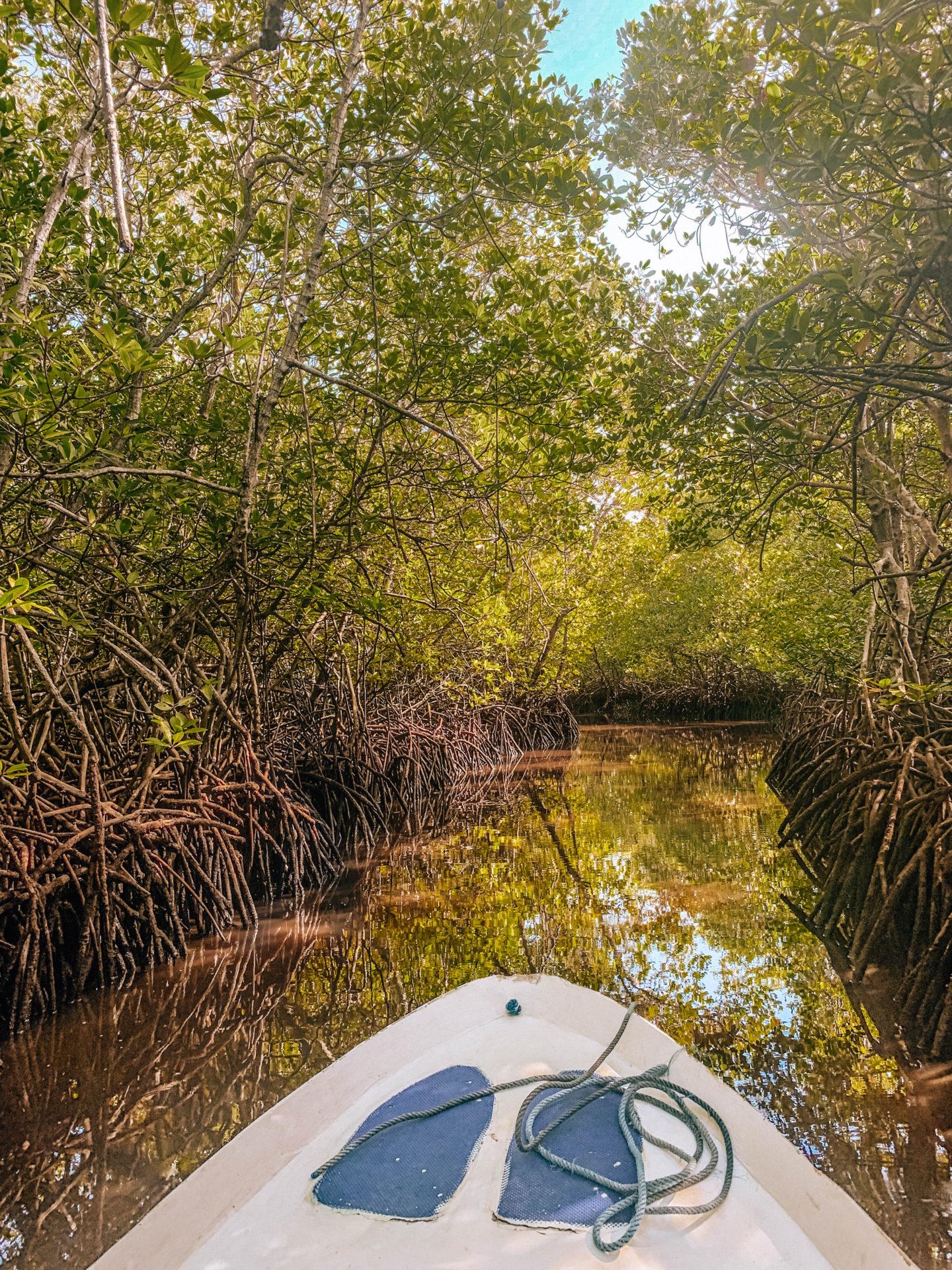 mangrove tour mangrove trees bali nusa penida nusa lembongan tour vacation brunettie